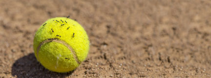 Flock of ants sticking round tennis ball Stock Images