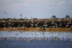 Flock av att flyga för fåglar royaltyfri foto