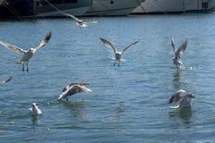 Flock av att flyga f?r seagulls royaltyfri foto
