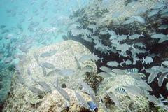 Flock av den tropiska fisken Arkivbild