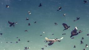 Flock av duvor i en blå himmel, tonad tappning och skrapor Begrepp för frihetsdestinationslopp royaltyfria bilder