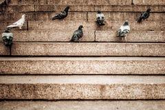 Flock av duvor på trappan på en solig dag Royaltyfria Foton