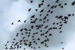 Flock av duvor som är höga i himlen royaltyfria bilder
