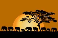 Flock av elefanter vektor illustrationer