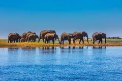 Flock av elefanter arkivfoton