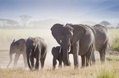 Flock av elefanter i den Amboseli nationalparken arkivbild