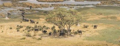 Flock av elefanter i den flyg- sikten för Okavango delta arkivbilder