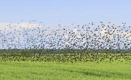 Flock av fågeln royaltyfria foton