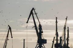 Flock av fågeln i hamnstad på den soliga dagen framme av kranar, kontur Royaltyfria Foton