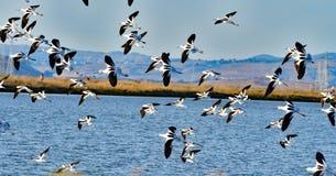 Flock av fåglar Arkivbilder