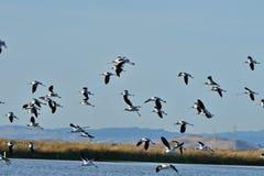 Flock av fåglar Arkivbild