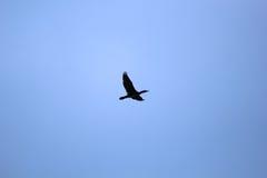 Flock av fåglar Fotografering för Bildbyråer