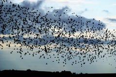 Flock av fåglar royaltyfri bild