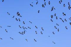 Flock av fåglar i den blåa skyen royaltyfri bild
