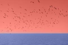Flock av fåglar i korallhimlen royaltyfri fotografi