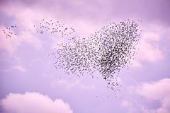 Flock av fåglar i lila himmel arkivfoton