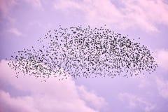 Flock av fåglar i lila himmel royaltyfri fotografi