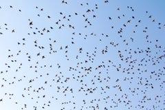 Flock av fåglar mot himlen Arkivfoto
