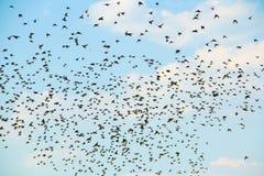 Flock av fåglar mot himlen Royaltyfria Foton