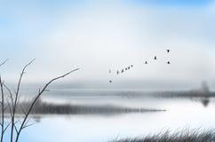 Flock av fåglar och dimma över kanalen i morgonen Arkivbild