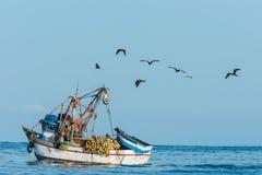 Flock av fåglar och fiskebåten i den peruanska kusten på Piura P fotografering för bildbyråer