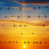 Flock av fåglar och soluppgång royaltyfria bilder