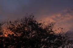 Flock av fåglar på överkanten av trädet royaltyfria foton