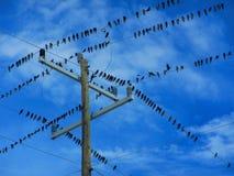 Flock av fåglar på elektriska trådar royaltyfri bild