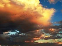 Flock av fåglar som framme flyger av det brännheta orange stormmolnet Arkivbilder