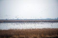 Flock av fåglar som tar flyg Royaltyfri Fotografi