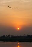 Flock av fåglar under solnedgång Royaltyfria Bilder