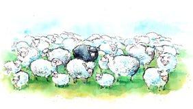 Flock av får Royaltyfri Fotografi