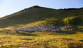 Flock av får i Dolomites, Italien Royaltyfria Foton