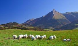 Flock av får och berg Txindoki, Gipuzkoa Arkivfoto