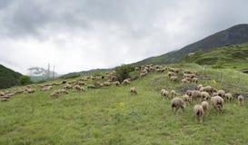Flock av får på bergäng i Frankrike arkivbilder