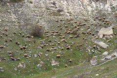 Flock av får på ett berg Arkivbild