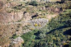 Flock av får på ett berg royaltyfri foto