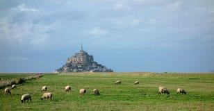 Flock av får på Mont Saint Michel i Frankrike Royaltyfri Foto