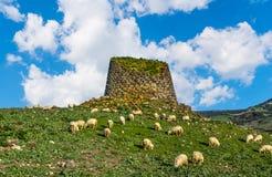 Flock av får vid en Nuraghe i Sardinia royaltyfria foton
