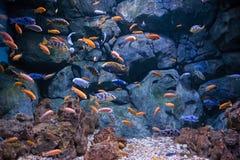 Flock av fiskar Royaltyfria Bilder