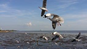 Flock av fiskmåsar 1 Fotografering för Bildbyråer