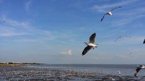 Flock av fiskmåsar 2 Royaltyfri Foto