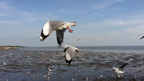 Flock av fiskmåsar 3 Royaltyfri Fotografi