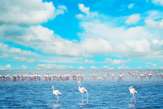 Flock av flamingo i ett damm arkivfoton