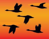 Flock av gässSilhouettes stock illustrationer