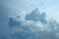 Flock av galanden med åskmolnet Arkivfoto