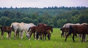 Flock av hästar royaltyfri fotografi