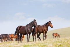 Flock av hästar arkivbilder