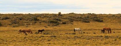 Flock av hästar Arkivfoton