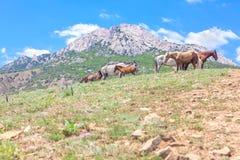 Flock av hästar i det löst Royaltyfri Fotografi
